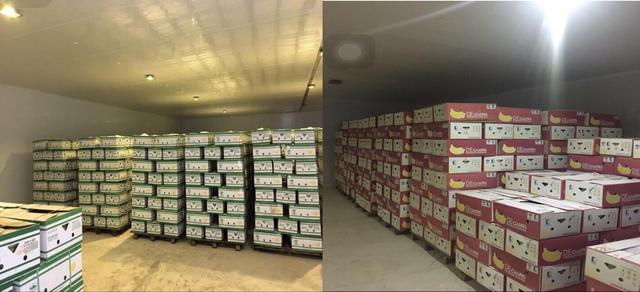 Hệ thống kho lạnh và vận tải lạnh là một phần thiết yếu của hệ thống phân phối chuối xuất khẩu