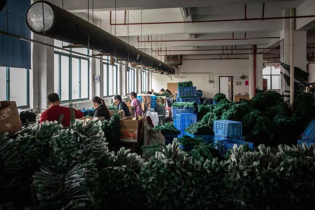 Ngôi làng Giáng Sinh ở Trung Quốc hoàn toàn thản nhiên trước cuộc chiến thương mại - Ảnh 1.