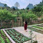 Mắc kẹt ở Mộc Châu do Hà Nội giãn cách, gia đình làm vườn đẹp mê - 1