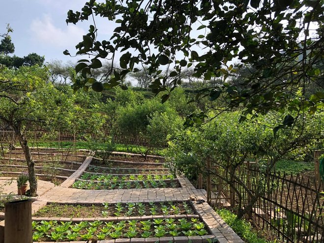Mắc kẹt ở Mộc Châu do Hà Nội giãn cách, gia đình làm vườn đẹp mê - 5