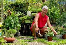 Giảng viên về hưu làm vườn nhiệt đới, trồng hoa hồng tặng vợ ở TPHCM - 1