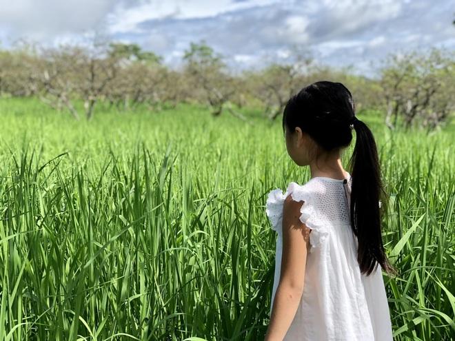 Mắc kẹt ở Mộc Châu do Hà Nội giãn cách, gia đình làm vườn đẹp mê - 11
