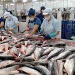 Chiến lược phát triển dài hơi để ngành cá tra vượt