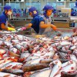 Gỡ khó cho tiêu thụ cá tra