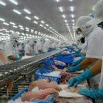 Ngành thủy sản Việt Nam xuất siêu 4,23 tỷ USD trong 8 tháng đầu năm